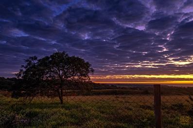 Backyard Sunrise